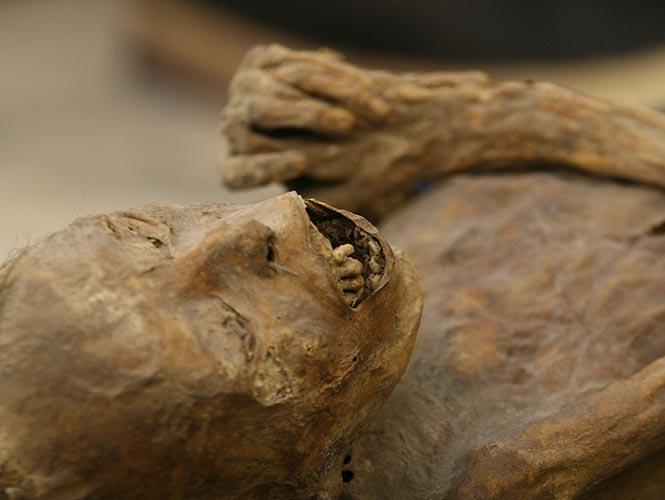 mummies-gto