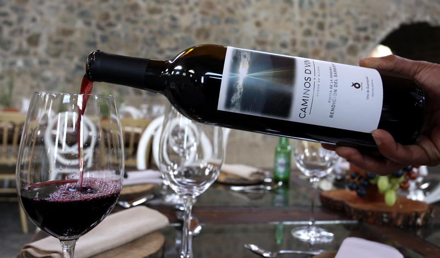 wine-guanjuato