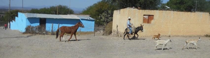 sm horse