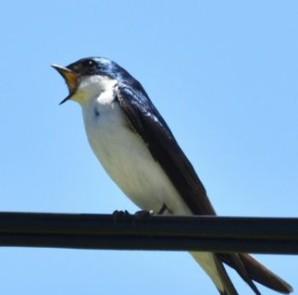 bird_july_17