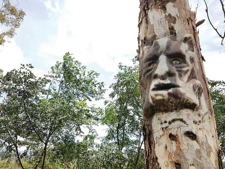 Toyan's trees