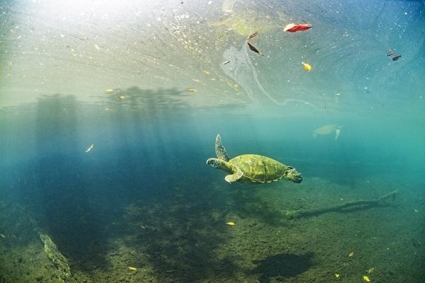 Octavio_Aburto__turtle