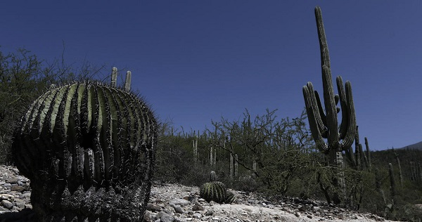 MEX05.VALLE DE CUICATL¡N (M…XICO), 27/07/2017.-Vista general el domingo 16 de julio de 2017, de la reserva de la biÛsfera Tehuac·n-Cuicatl·n, en Zapotitl·n Salinas, en Puebla (MÈxico). La reserva de la biÛsfera Tehuac·n-Cuicatl·n, fue propuesta para que quede integrada en la lista de Patrimonio Mixto de la Humanidad de la OrganizaciÛn de las Naciones Unidas para la EducaciÛn, la Ciencia y la Cultura (Unesco, por sus siglas en inglÈs), en su pasada reuniÛn. La reserva de la biÛsfera Tehuac·n-Cuicatl·n comprende un ·rea de 490.000 hÈctareas, en 51 municipios (31 del estado de Oaxaca y 20 de Puebla), repartido en 400 comunidades. EFE/Hugo OrtuÒo